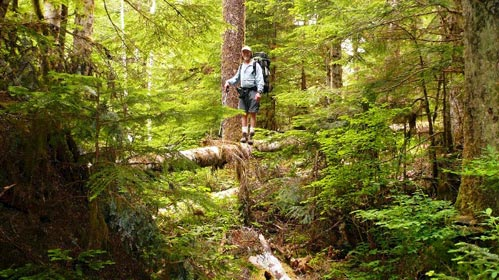Don Wicklund crossing a tall mossy log.
