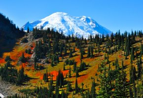 Mt Rainier set against a deep blue sky and a foregound ridge with flaming red Fall foliage
